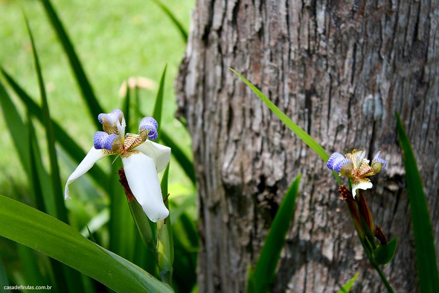 orquídea jardim