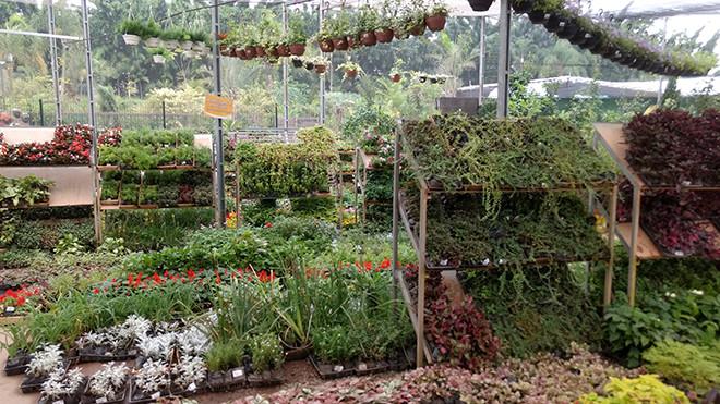 garden_center6
