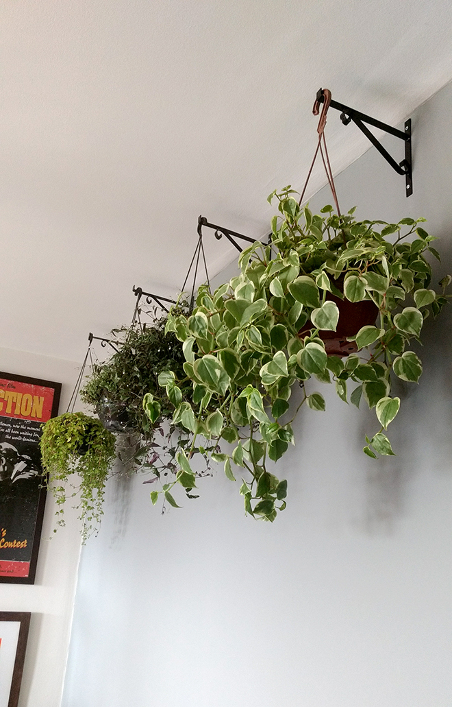 plantas_pendentes_casa